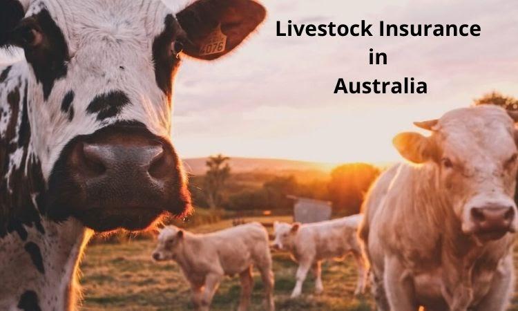 livestock insurance in Australia
