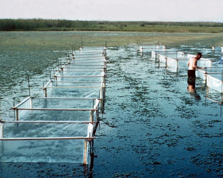 Aquatic Herbicides
